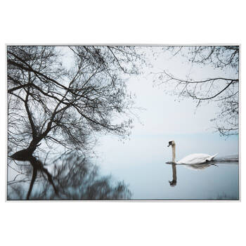 Swan on the Lake Framed Art