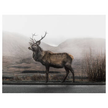 Elk Printed Canvas