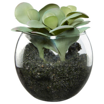 Succulent Plant in Glass Pot