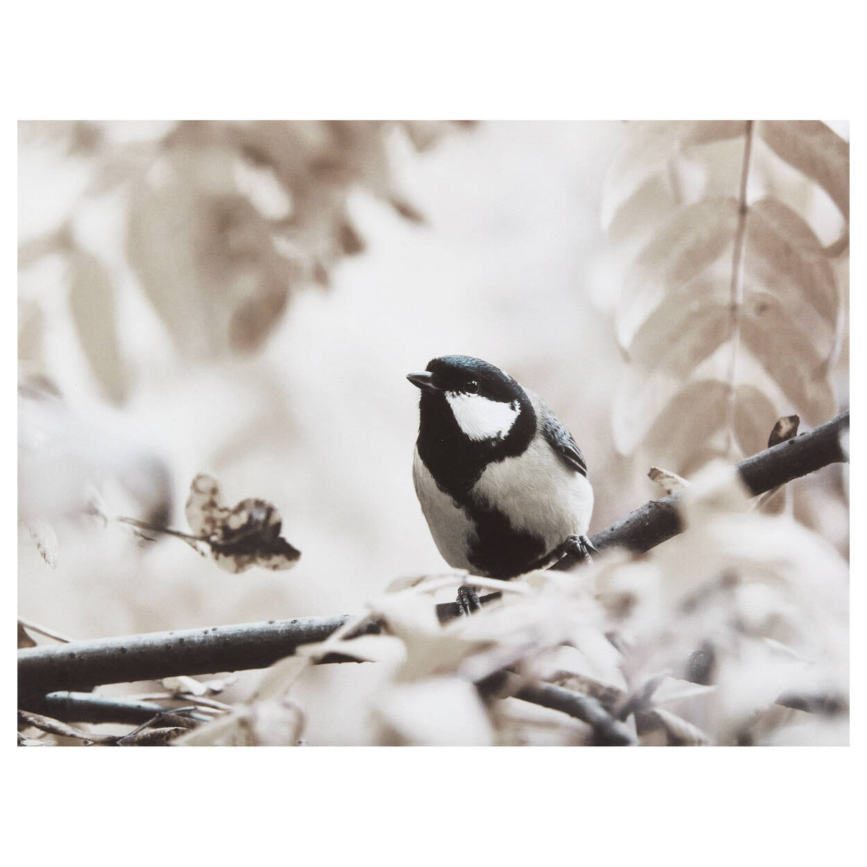 Chickadee in Tree Printed Canvas