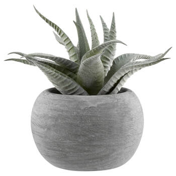 Frosted Succulent Plant in Cement Pot
