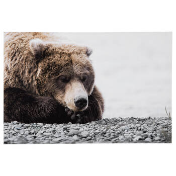 Sleeping Brown Bear Printed Canvas