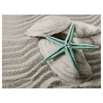 Starfish & Seashells Canvas