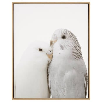 Budgies Framed Printed Canvas