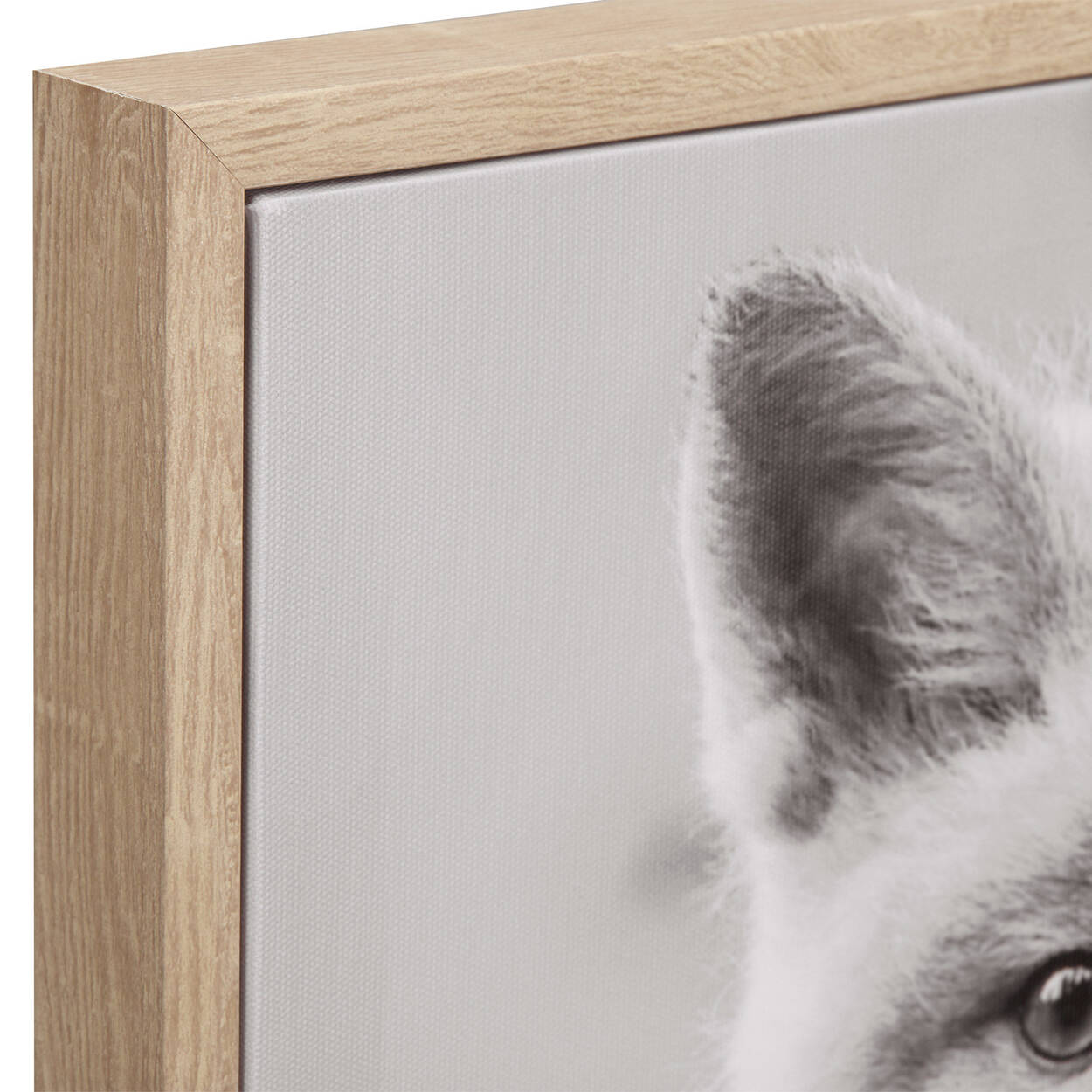 Baby Fox Framed Art