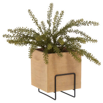 Natural Wood Square Pot with Fern
