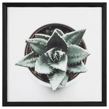 Cadre imprimé vue aérienne d'une plante succulente
