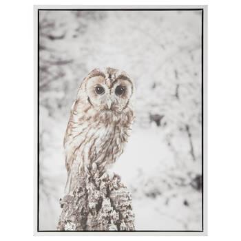 Staring Snow Owl Framed Art