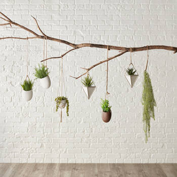 Plante suspendue avec corde naturelle