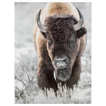 Bison Printed Canvas