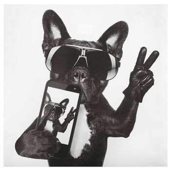 French Bulldog Selfie Canvas