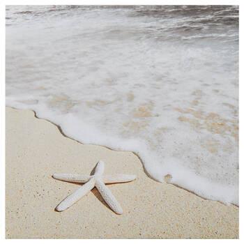Starfish Printed Canvas