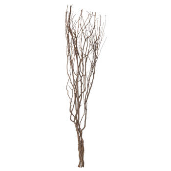 Bundle of Branches