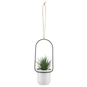 Hanging Agave in a Pot