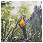 Shy Parrot Printed Canvas