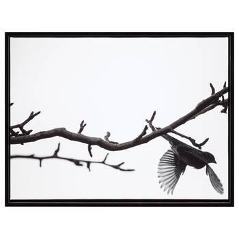 Sparrow Framed Art