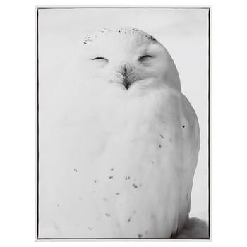 Sleeping Owl Printed Framed Art