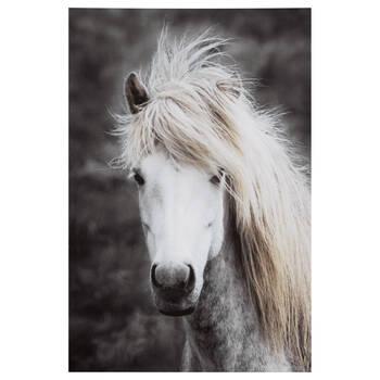 Long Mane Horse Printed Canvas