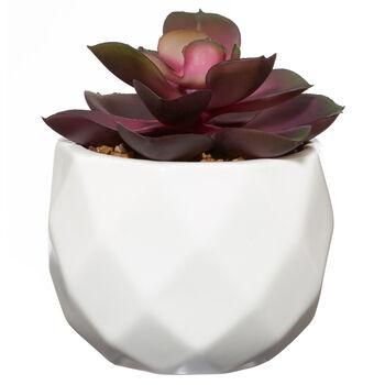 Coloured Succulent in Cement Pot