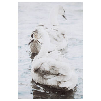 Swans on a Lake Printed Canvas