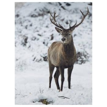 Deer in Winter Printed Canvas