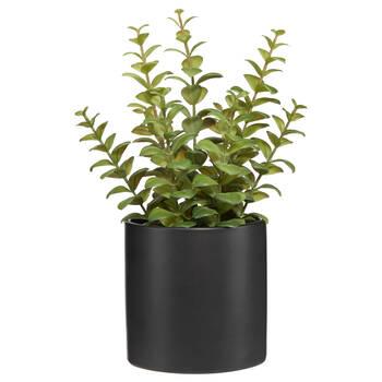 Ceramic Potted Apple Succulent