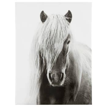 Icelandic Horse Printed Canvas