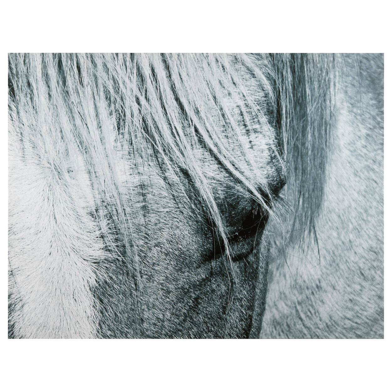 Grey Horse Printed Canvas