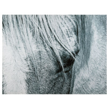 Grey Horse Printed Canvas