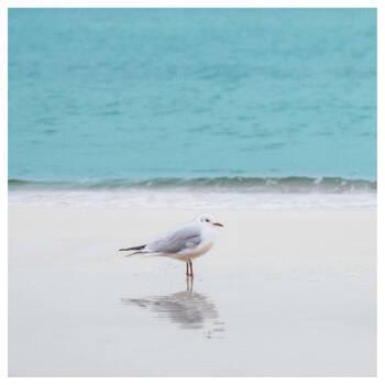 Seagull Printed Canvas