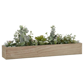 Succulents in Wooden Pot