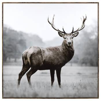 Majestic Deer Printed Canvas