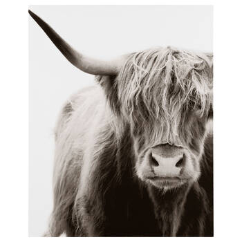 Gentle Galloway Cattle Printed Canvas