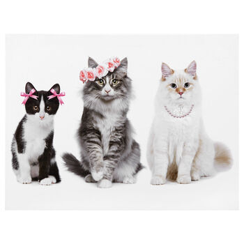 Pretty Cats Printed Canvas