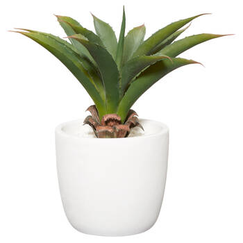 Cement Potted Aloe
