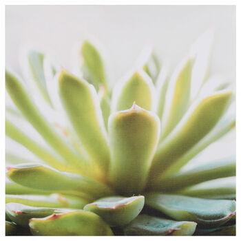 Succulent Printed Canvas