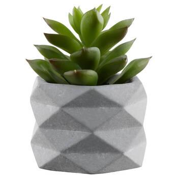 Succulent in Geometric Cement Pot