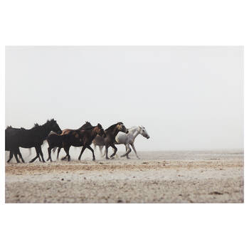 Wild Horses Printed Canvas