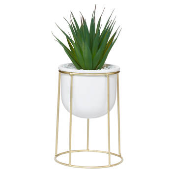 Plant on a Stand