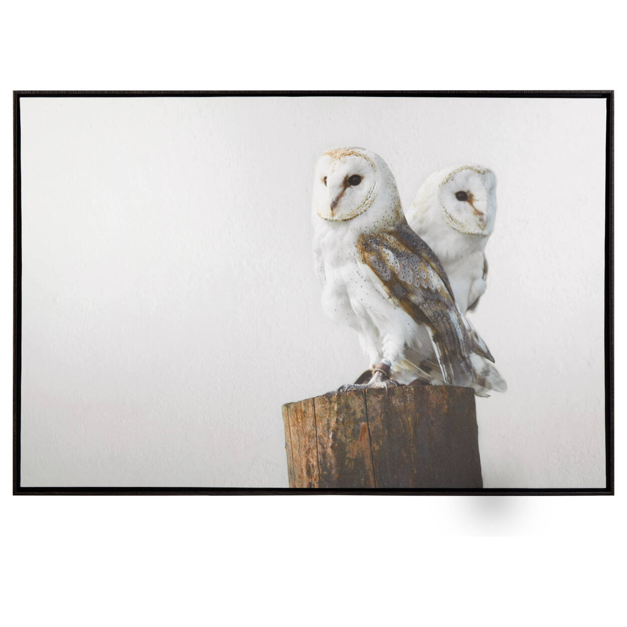 Owls Framed Art