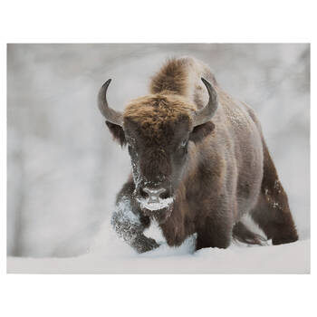 Bison Printed Framed Art