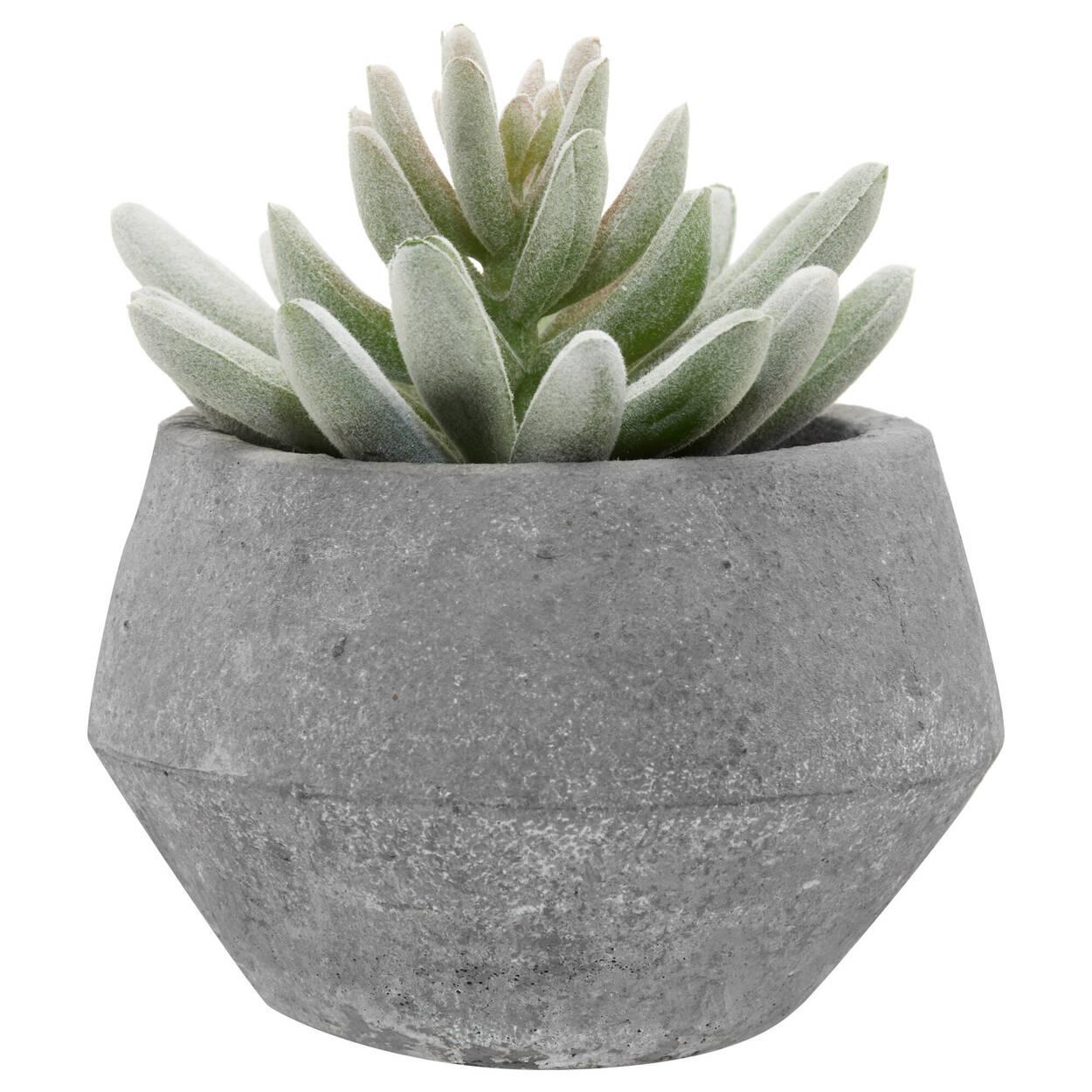 Plante grasse avec pot en ciment