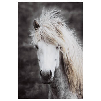 Long Mane Horse Printed Canvas