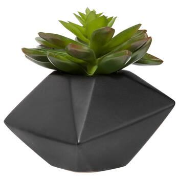Verdure en pot de céramique