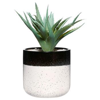 Two-Tone Ceramic Potted Aloe