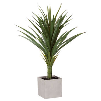 Tropical Plant in Cement Pot