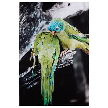Rainbow Parakeets Printed Canvas