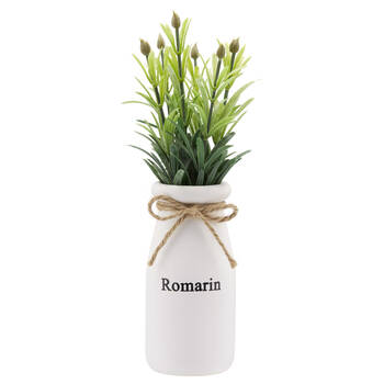 Rosemary in White Ceramic Pot
