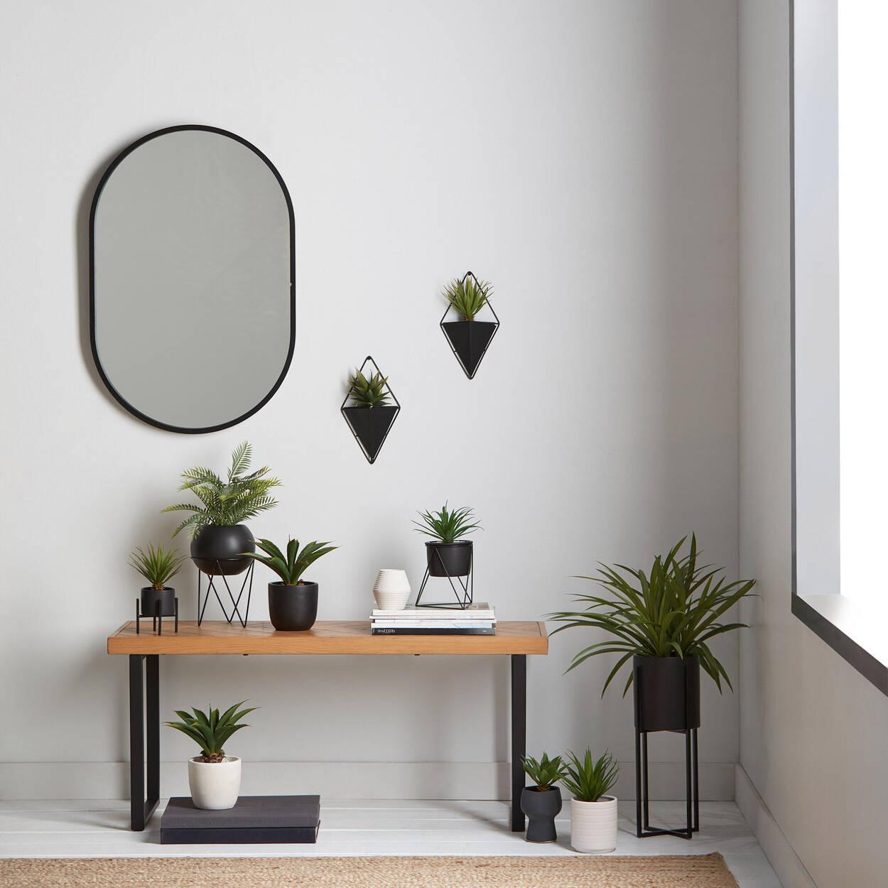 Plante succulente sur pied