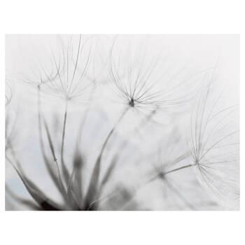 Windy Dandelions Printed Canvas